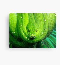Green Tree Snake Metal Print