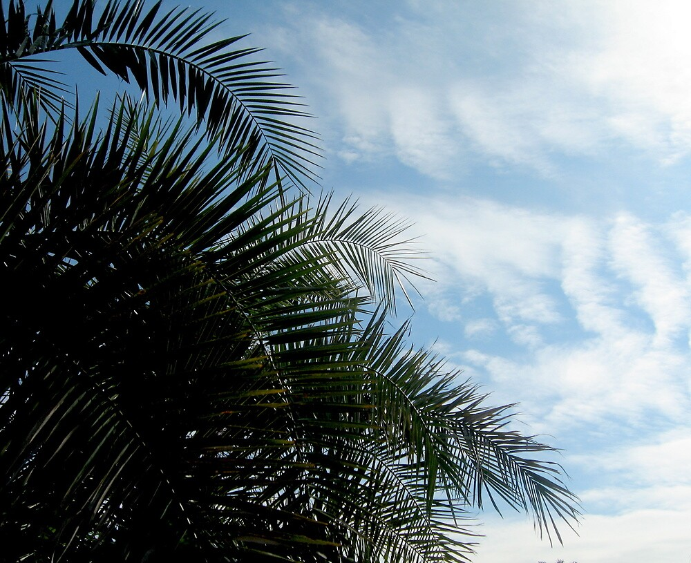 Ahhhhh.... Palm Trees... January 3, 2011 by Debbie Robbins