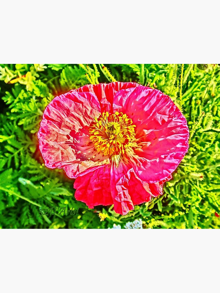 Green Island Poppy by 32DARTS