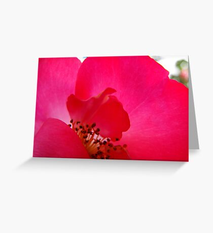 Hot Pink Rose Greeting Card