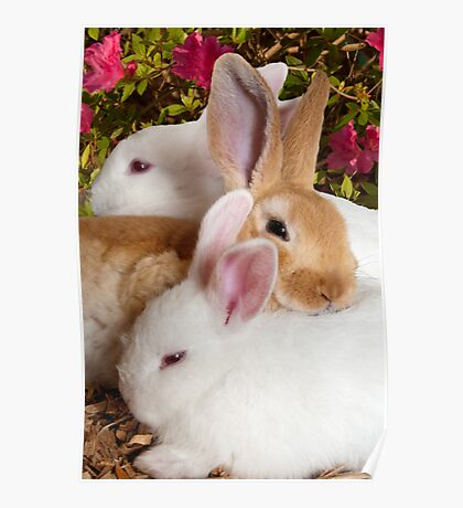 """""""The Bunny Bunch"""" - rabbits snuggling Poster"""