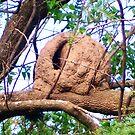 Hornero's Nest by DCFotos