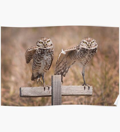 """""""Put Your Right Foot Out"""" - burrowing owls Poster"""