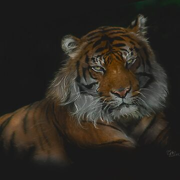 Majestic - Siberian Tiger by ckdesigns