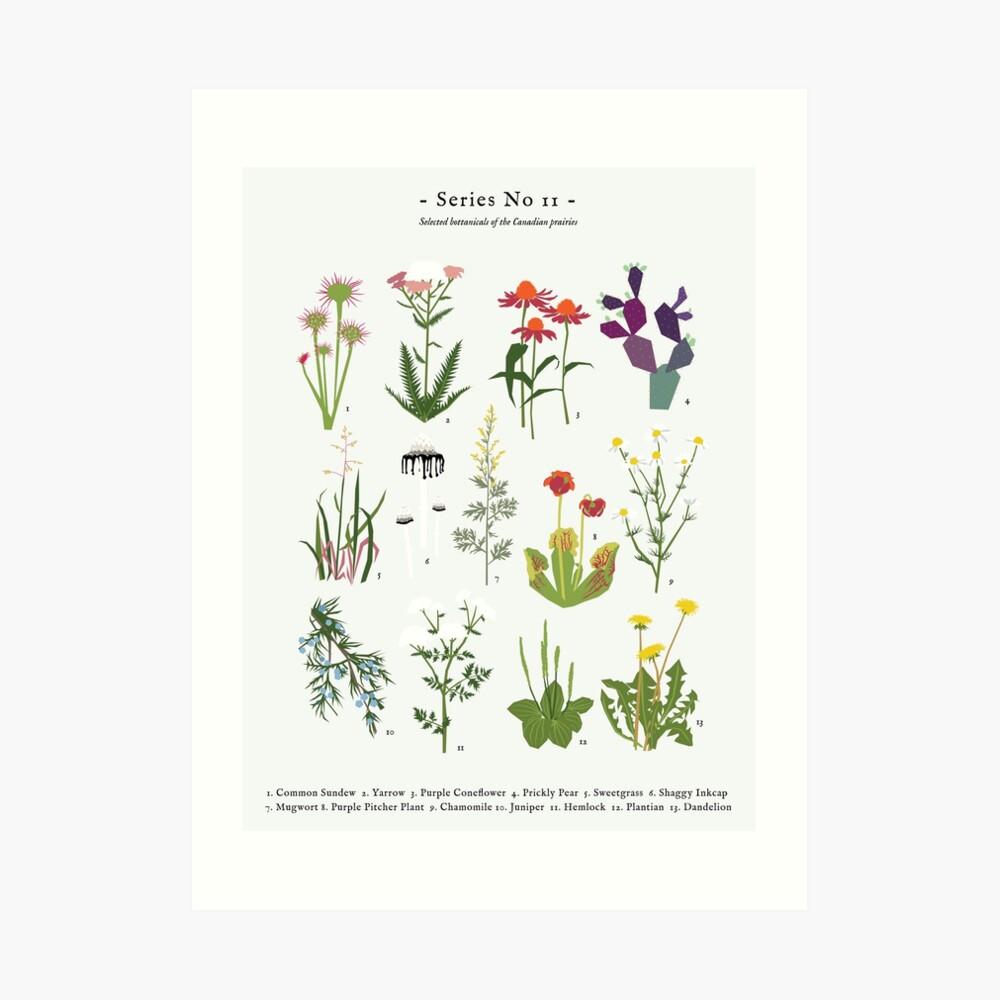 Canadian Prairie Botanicals Art Print