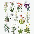 Canadian Prairie Botanicals by jbott