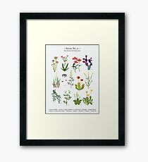 Canadian Prairie Botanicals Framed Print