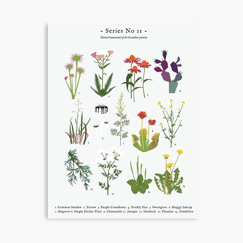Canadian Prairie Botanicals Canvas Print
