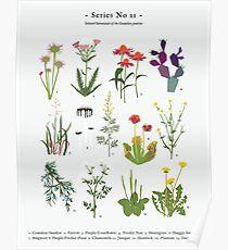 Canadian Prairie Botanicals Poster