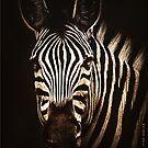 Zebra von Marlene Watson