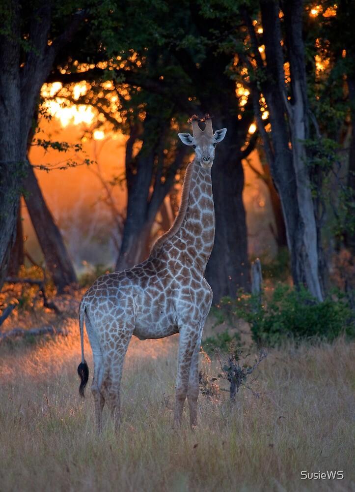Botswana Wildlife #2 - Giraffe by SusieWS
