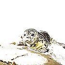 Seal Pup von Marlene Watson
