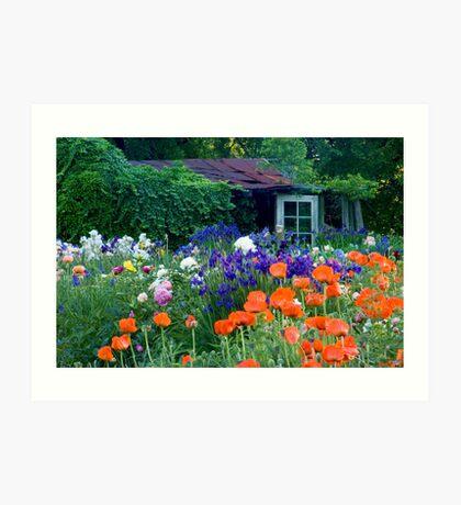 Garden Shed Art Print