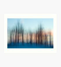 Winter Trees at Dawn Art Print
