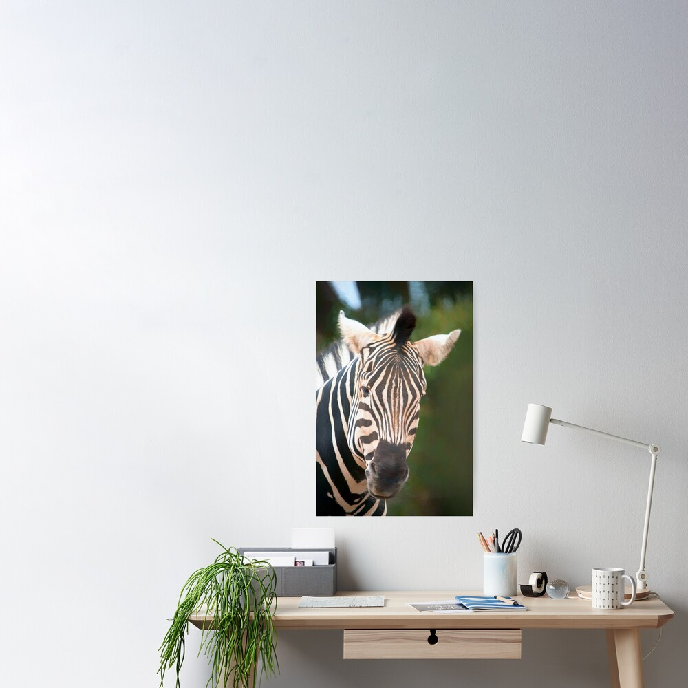 Curious Zebra (digital painting) Poster