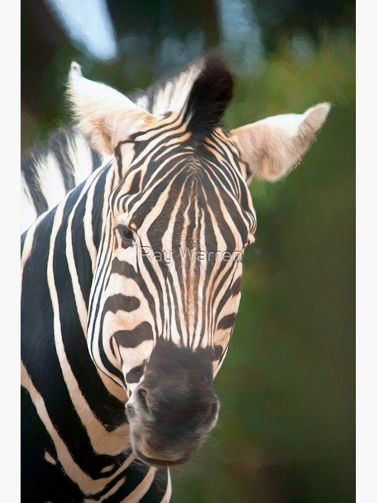 Curious Zebra (digital painting) by RayW