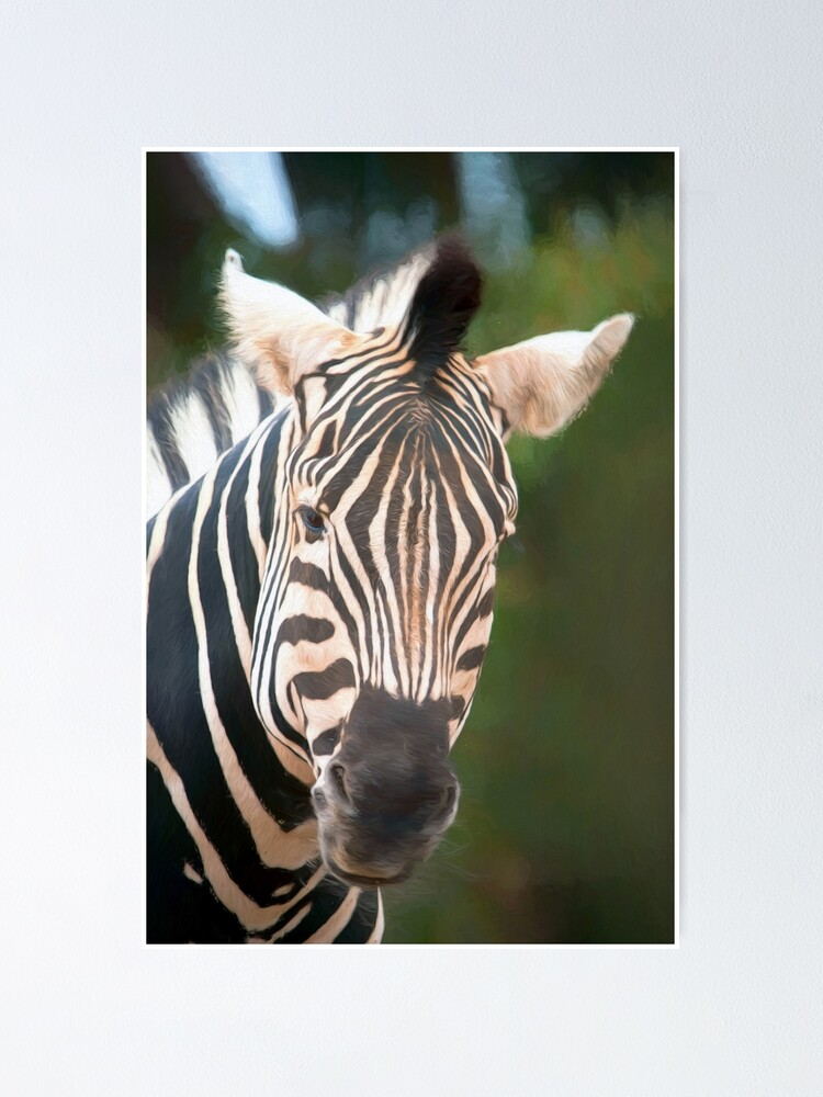 Alternate view of Curious Zebra (digital painting) Poster