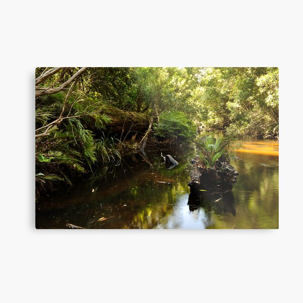 Another forgotten log Metal Print