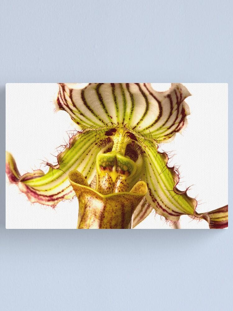 Alternate view of Paphiopedilum Fairrieanum Orchid Canvas Print