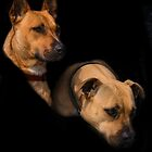 Two Dogs by Elaine Teague