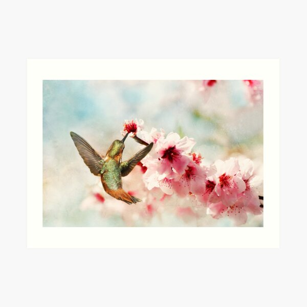 Magic in the Blossoms Art Print