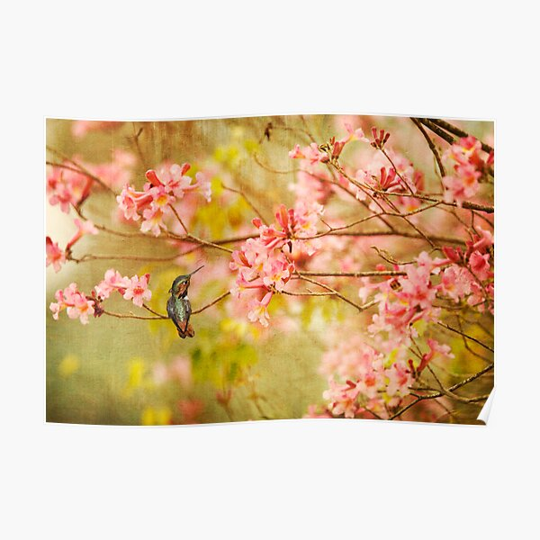 Allens Hummingbird with Spring Blossoms Poster