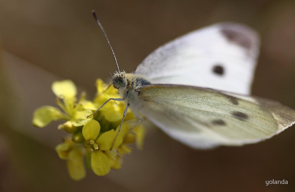 White Butterfly by yolanda