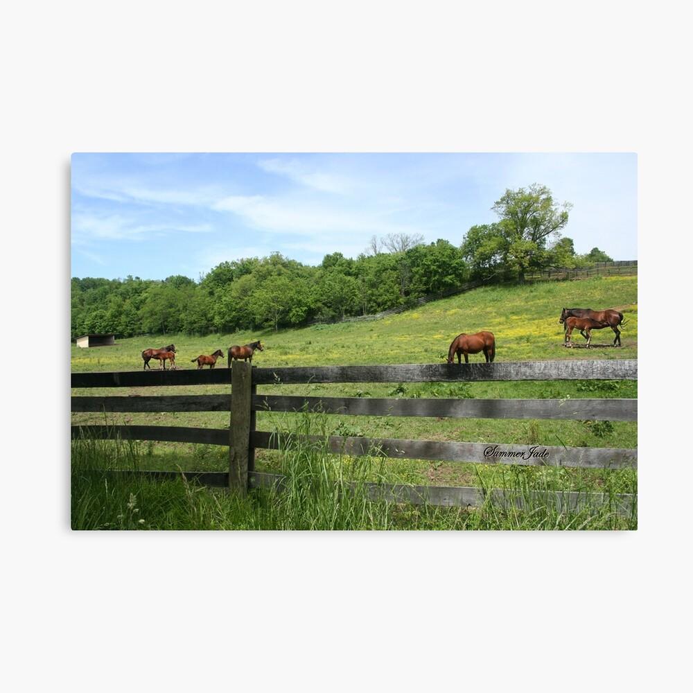 Springtime in a Peaceful Pasture Canvas Print