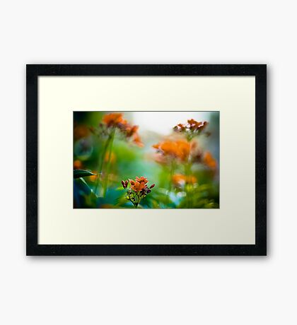 Orange meet green: On Featured : Point and Shooters group Framed Print