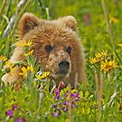 Fun in the Flowers!! by Anthony Goldman