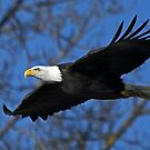 Flying Free in the Land of the Free by Chuck Gardner