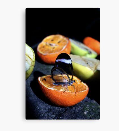 Glasswing Butterfly Canvas Print