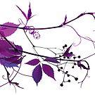 Grapes by Igor Mazulev