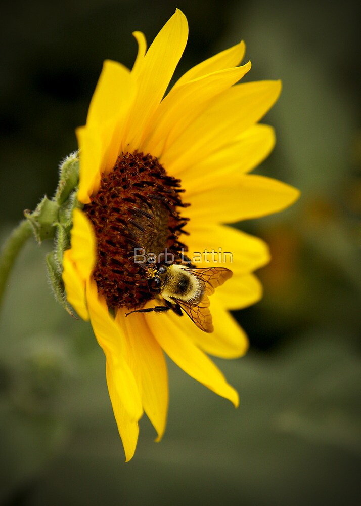 Busy Bee by Barb Lattin