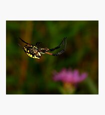 Black and Yellow Garden Spider High Wire Act Photographic Print