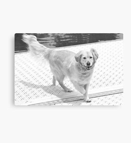 Gratuitous Dog Pic Canvas Print