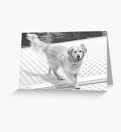Gratuitous Dog Pic Greeting Card