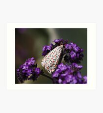Crimson-speckled moth Art Print