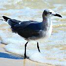 Bird Surfing by Scott Hayes