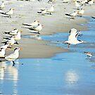 The Tern-ing Tide by Scott Hayes