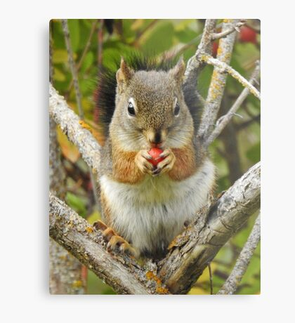 Adorable Mountain Ash Berry Squirrel Metal Print