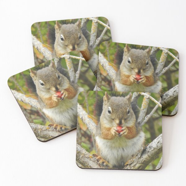 Adorable Mountain Ash Berry Squirrel Coasters (Set of 4)