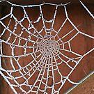 Frosty Cobweb by John Keates