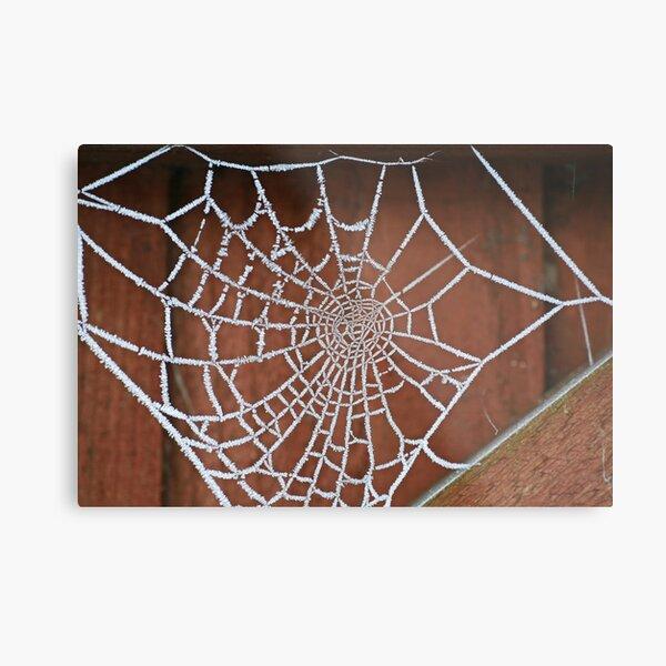 Frosty Cobweb Metal Print