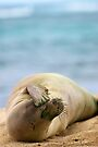 monk seal on the beach by Flux Photography