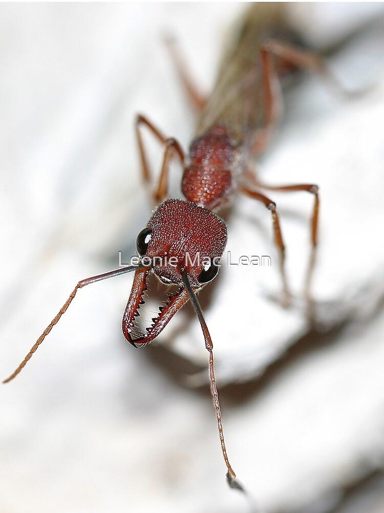 Australian Ant by yallmia
