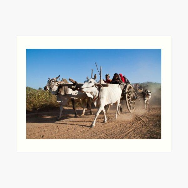 Ox power - the 'new' environmentally green solution? Art Print