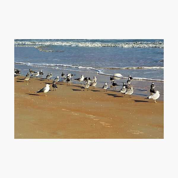 Did Someone Say Beach Party? Photographic Print