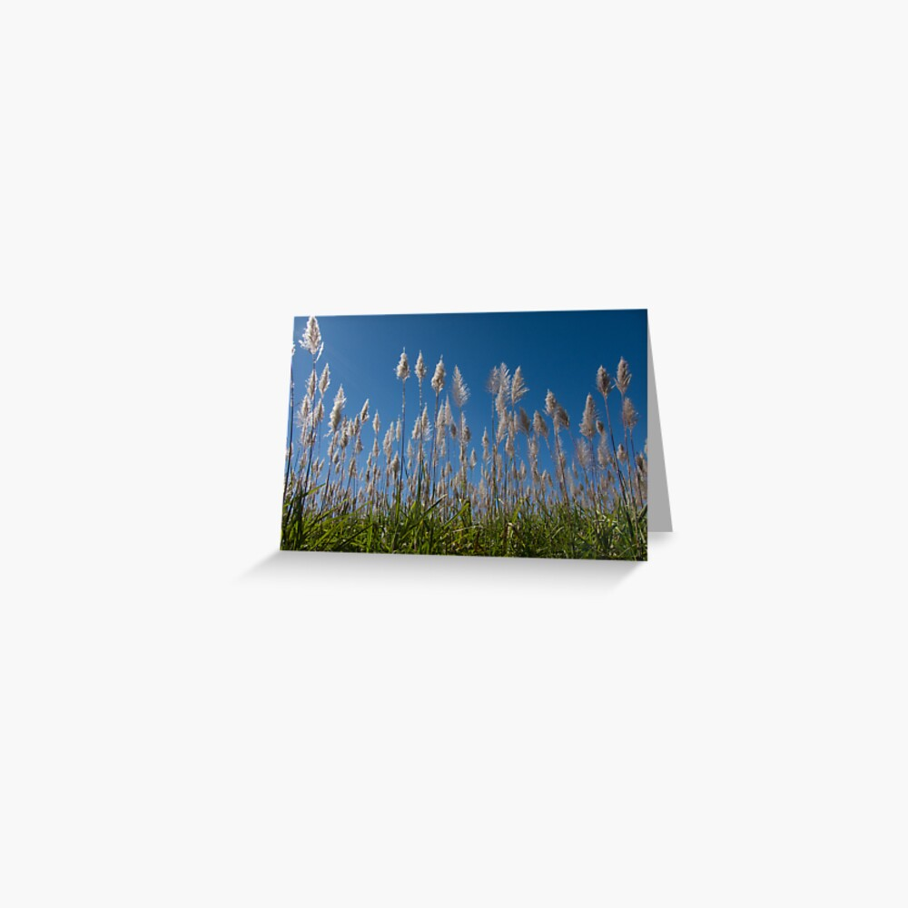 Sugar Cane blues Greeting Card