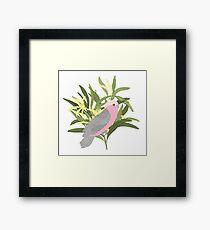 Pink Galah in Australian Native Wattle Framed Print